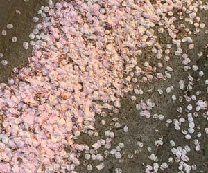 beauty, cherryblossom, and nature image