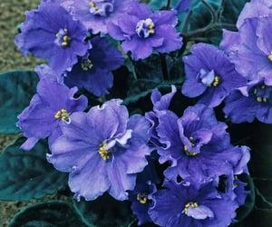 flowers purple flowers image