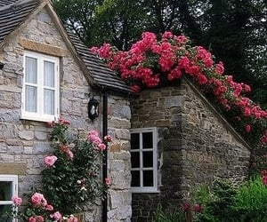 flowers, home, and roses image