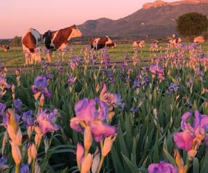 flowers, nature, and animals image