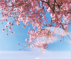 blossom, blue, and flower image