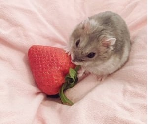cute, strawberry, and hamster image
