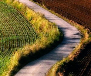 fall, autumn, and country road image
