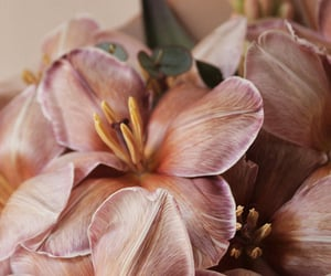 bouquet, brown, and nature image