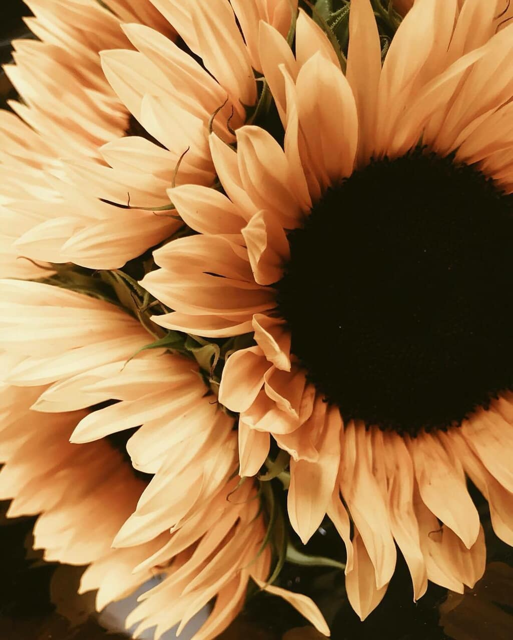 flowers, pale, and sunflower image
