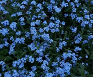 blue, flowers, and forest image
