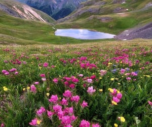 flowers, green, and landscape image