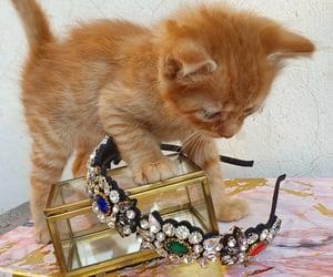 accessories, photoshoot, and handmade image
