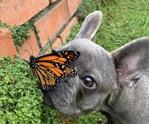 butterfly, cuteness, and dog image