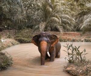 elefant image
