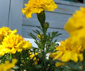 colors, flowers, and yellow image