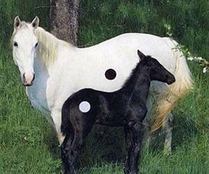 aesthetic and yin yang image