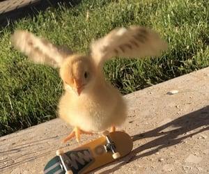 animal, Chick, and skate image