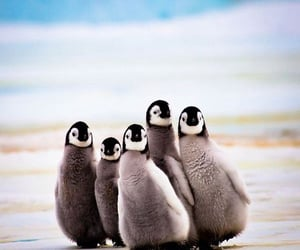 animals, antarctica, and beautiful image
