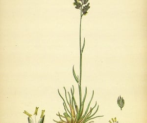 Great Britain, pictorial works, and plants image