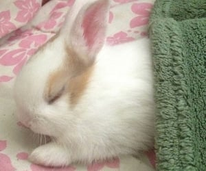 bunny, cute, and pet image