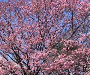 2020, beautiful, and cherry blossoms image