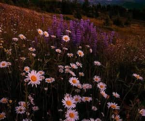 aesthetic and flores image