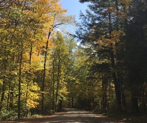 beauty, country, and fall image