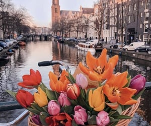 flowers and netherlands image