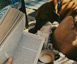 book, dog, and morning image