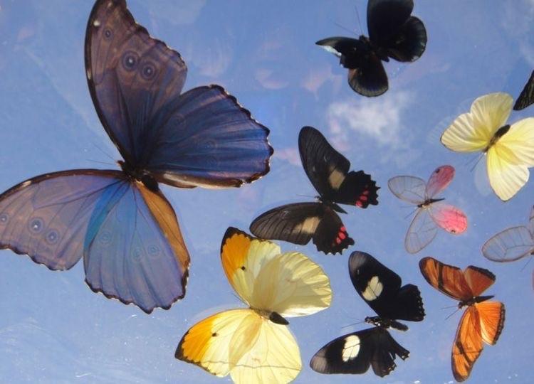 articles, butterflies, and garden image