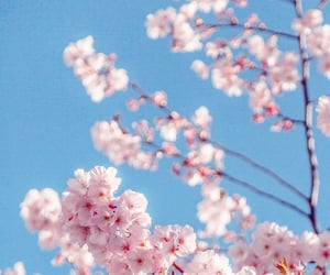 flowers, pink flowers, and spring image