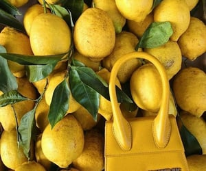 yellow, lemon, and bag image
