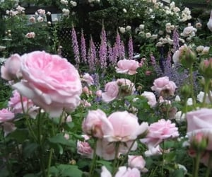 field, floral, and pink image