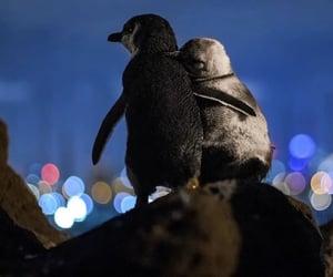 animal, love, and australia image