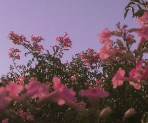 flowers, aesthetic, and moon image