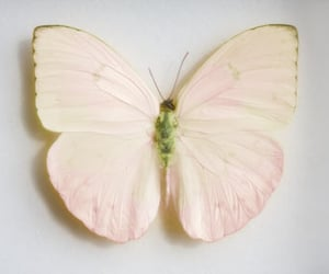 butterfly, pastel, and pink image
