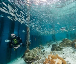 diver, diving, and scuba image