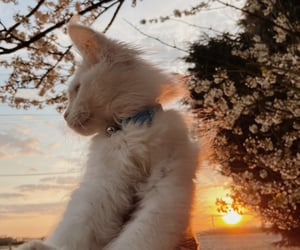 cat, photography inspiration, and tumblr instagram image
