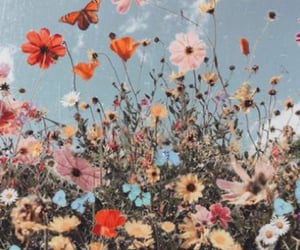 flowers, butterfly, and aesthetic image