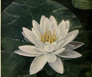 botany, united states, and flowers image