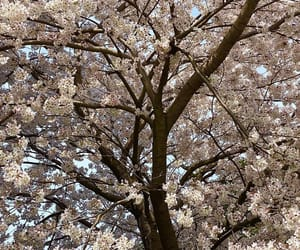 aesthetic, cherry blossom, and grunge image