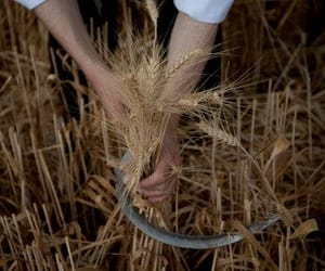 harvest and sythe image