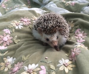 animal, hedgehog, and flowers image