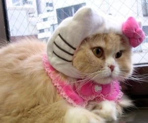 cat, hello kitty, and kitty image