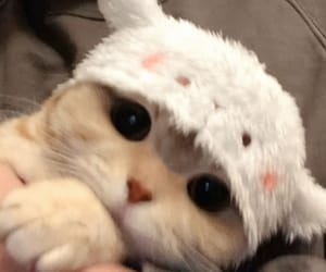 cats, kitten, and kitties image