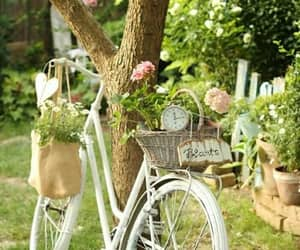 beautiful, beauty, and garden image
