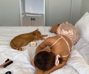 animals, cats, and sundays image