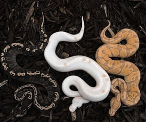 snake, animal, and archive image