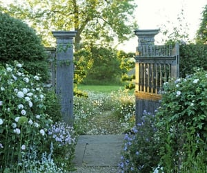 garden, devonshire, and flowers image