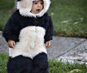 adorable, cute, and panda image