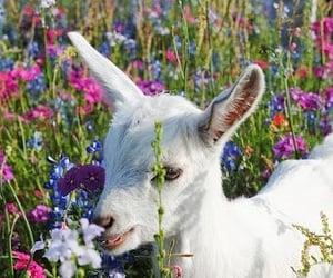 flowers, lamb, and animal image