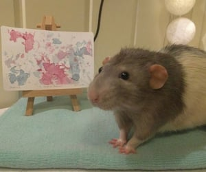 mouse, rat, and aesthetic image