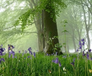 flowers, green, and misty image