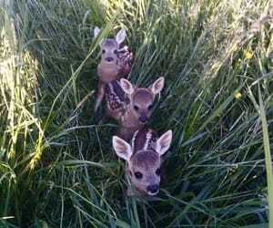 animals, deer, and fawns image
